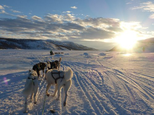 Dog-sledding-Tromso-HGR-90482_500