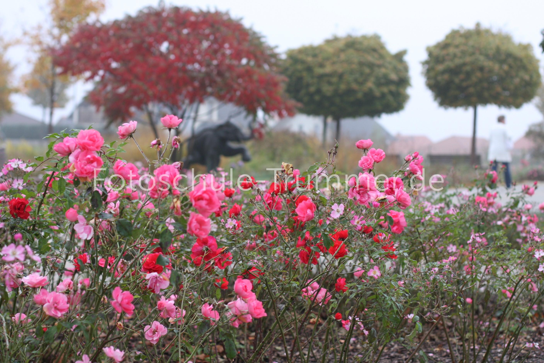 Herbstblumen (6)