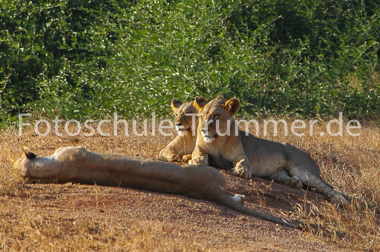 kenia 16 Fotoreise Day4 tsavo2 safari-36
