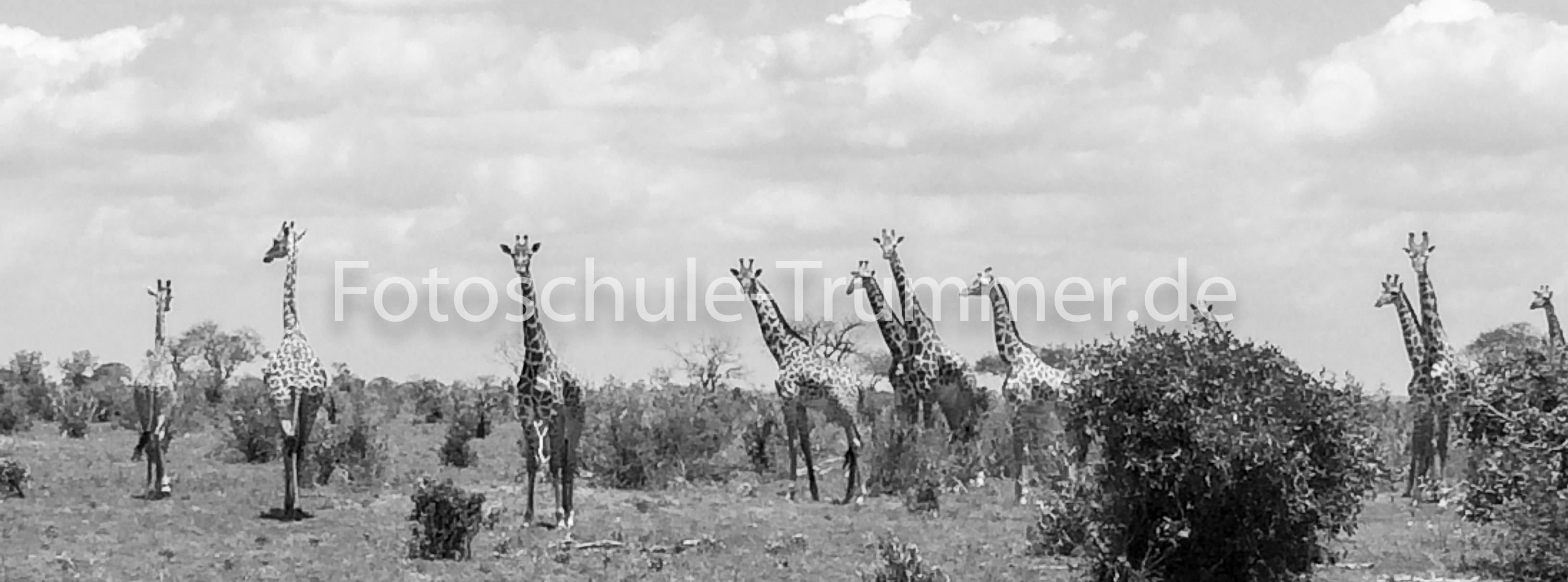 Foto Safari kenia