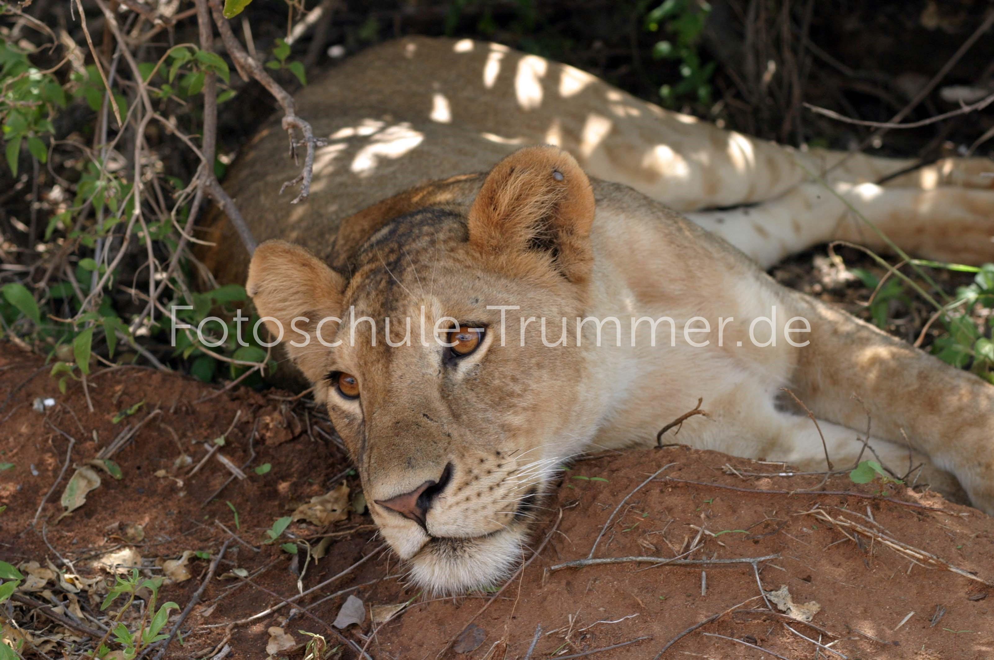 kenia safari (81)
