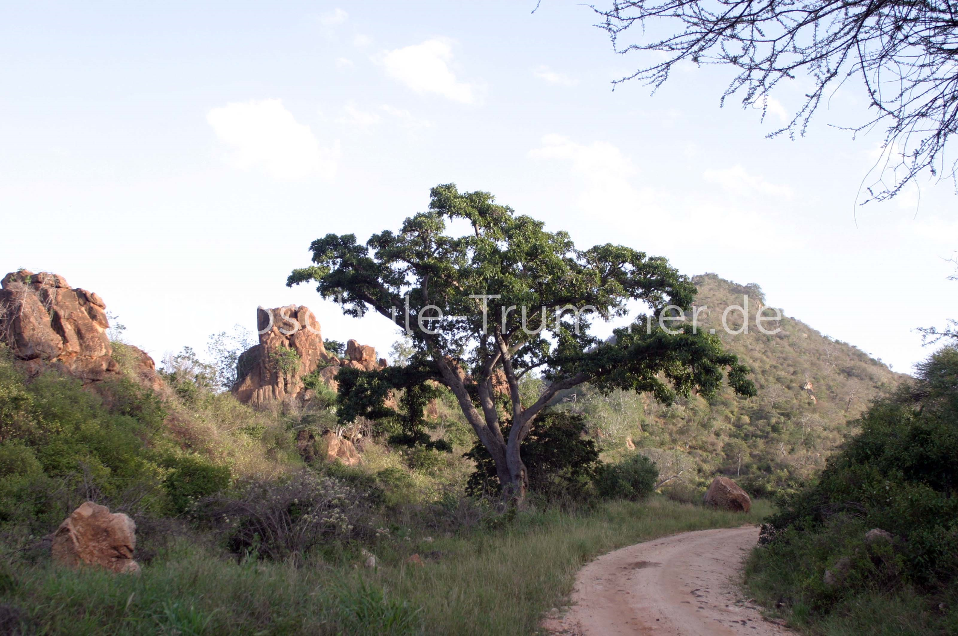 kenia safari tsavo west (14)