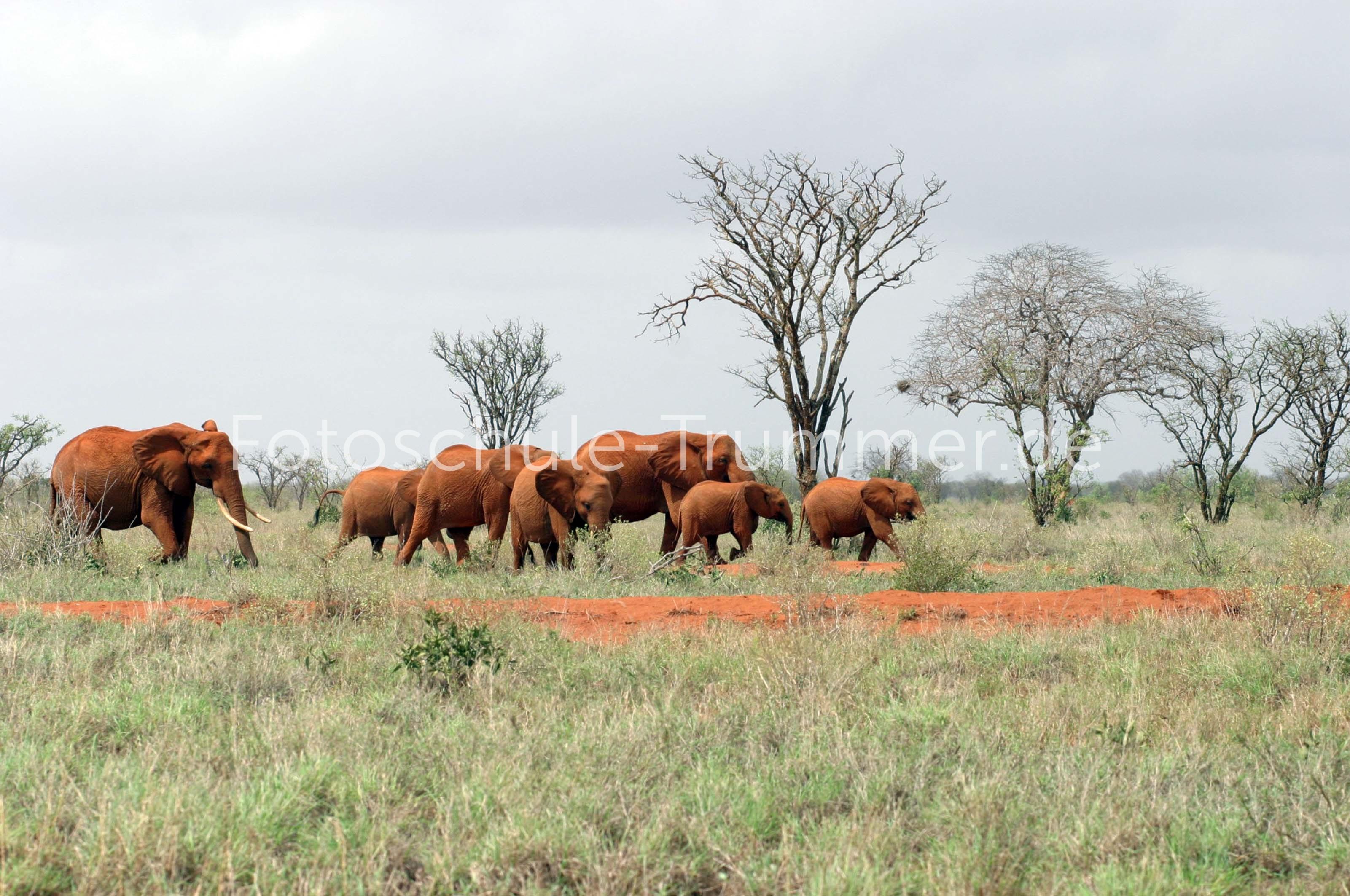 kenia safari zeltcamp (41)