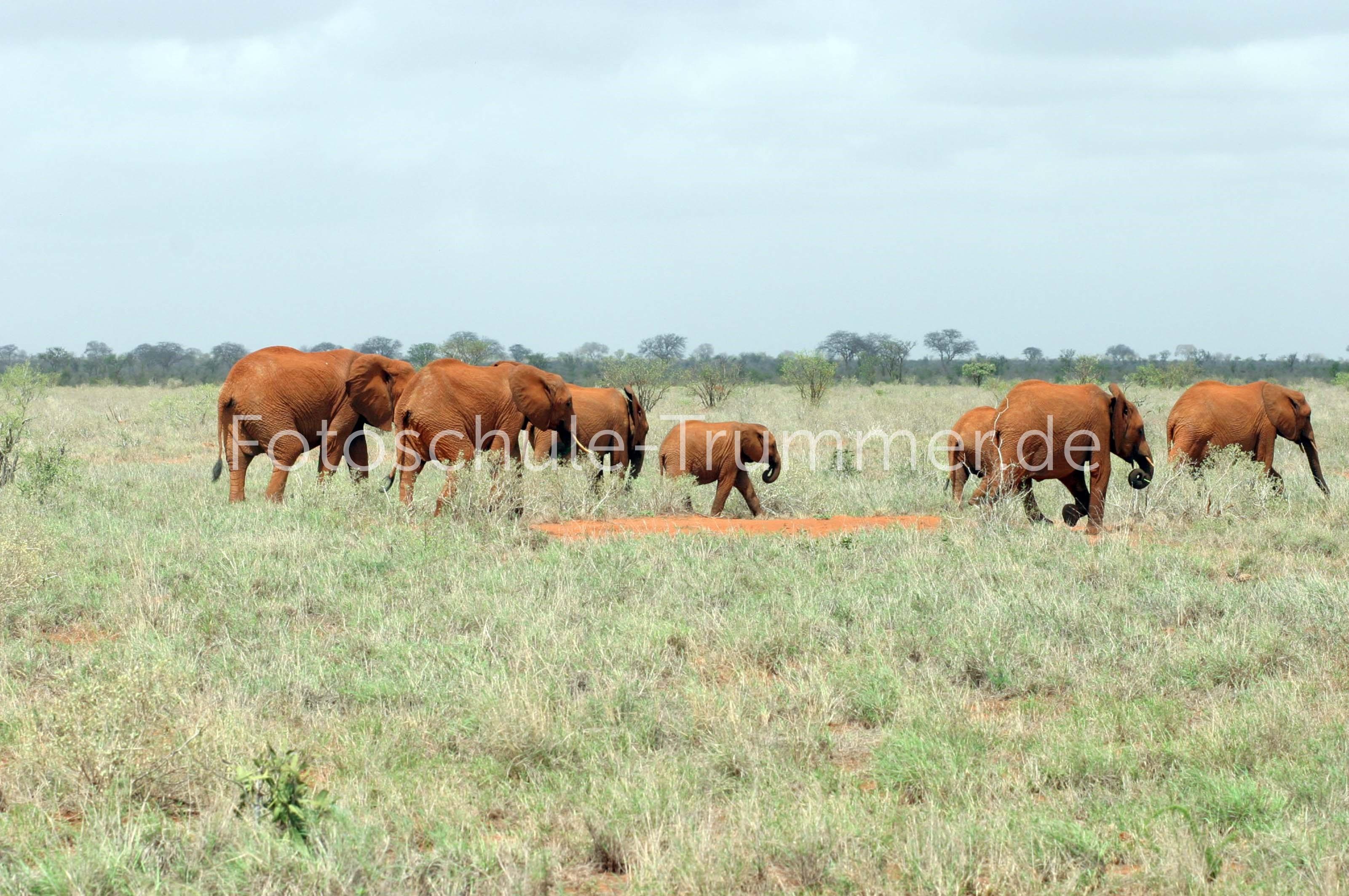 kenia safari zeltcamp (50)